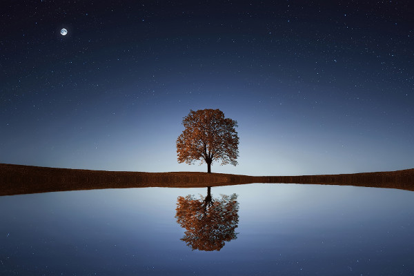 Calming image of a majestic tree.